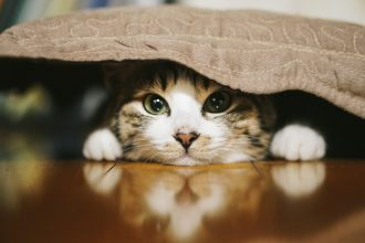 【光が丘本院】猫キャンペーン実施中!