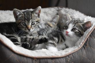 メス猫の知っておくべき、7つの発情行動。