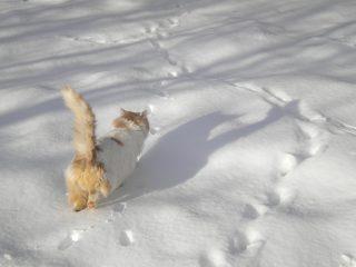 【光が丘本院】猫ちゃん健康診断キャンペーンもうすぐ終了
