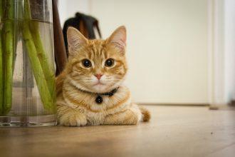 猫去勢の手術後、帰宅してからの5つの猫の様子