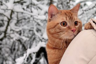 「猫ちゃん健康診断キャンペーン」11月より開始